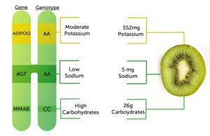 genebreakdowngenopalate